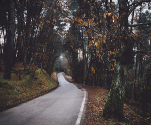 autumn, road, and forest image