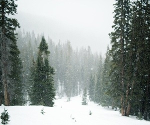 quotes, snow, and tree image