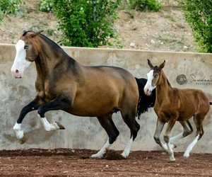 brown, horse, and run image
