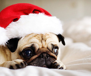 christmas, dog, and cute image