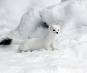 animals, snow, and white image