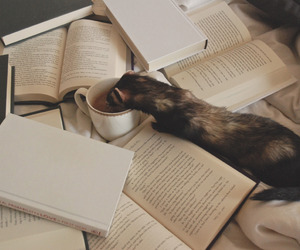 book, adventure, and coffee image
