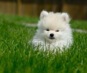 adorable, cute, and animals image