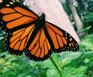 wings, butterflies, and butterfly image