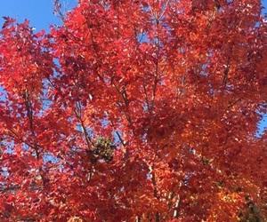 autumn, tree, and autumn season image