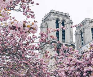 cathedral, flowers, and france image