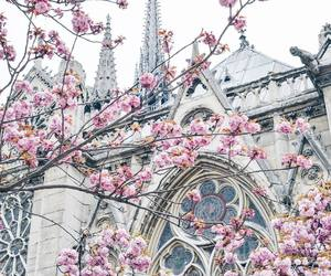 cathedral, place, and flowers image