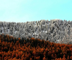 red, snow, and autumn image