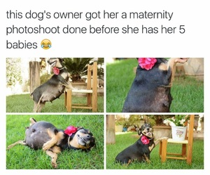 dog, funny, and pregnant image