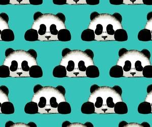 panda, sweet, and pattern image
