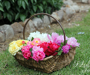 flowers, roses, and gardening image