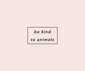 animal, quotes, and pink image