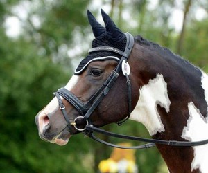 beauty, bridle, and dressage image