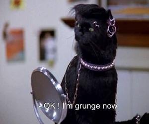 grunge, cat, and salem image