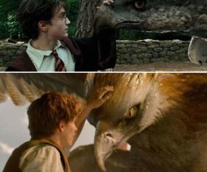 alike, animal, and beast image