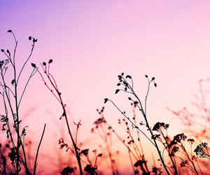 flower, sky, and photography image