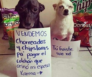 chips, humor, and perros image