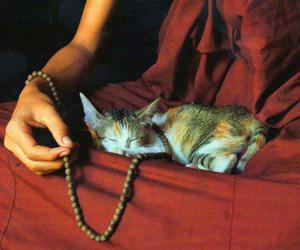 buddhism and cat image