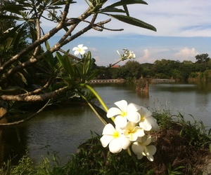 flower, Vietnam, and lake image