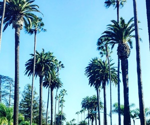 california, losangeles, and palmtree image