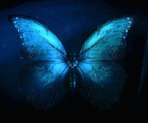 butterfly, effect, and game image