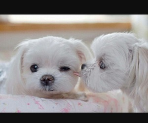 dog, cute, and puppies image