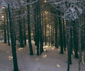 amazing, tumblr, and winter image