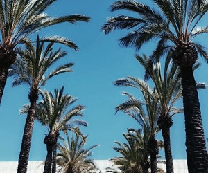 mallorca, palm trees, and summer image