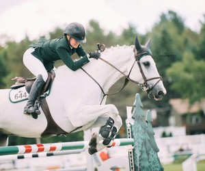 equestrian, horse, and sport image