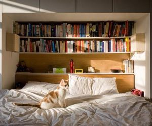 book, cat, and bed image