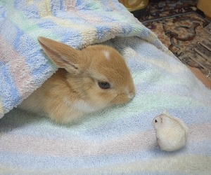 bunny, hamster, and rabbit image