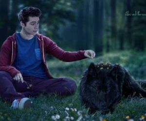 teen wolf, sterek, and derek hale image
