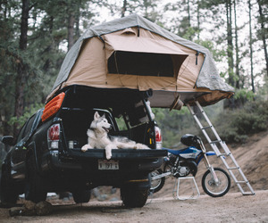 animal, camping, and car image