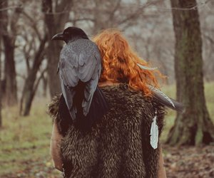 crow, forest, and raven image