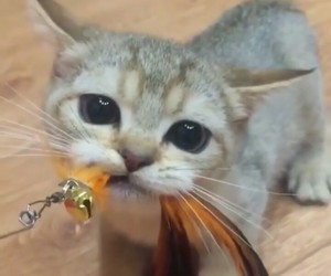 cat, cats, and cat play image