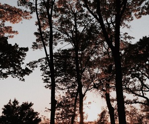 nature, sunset, and trees image