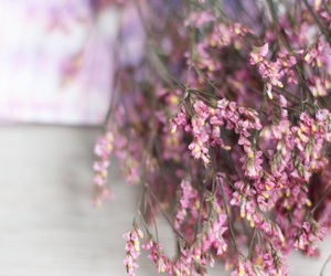 autumn, flowers, and pink image