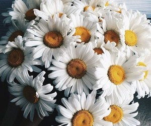 love, beautiful things, and daisies image