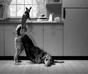 dog, funny, and kitchen image