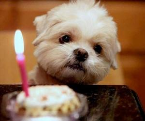 puppy, birthday, and cute image