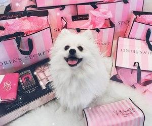 dog, pink, and animal image
