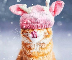 winter, cat, and cute image