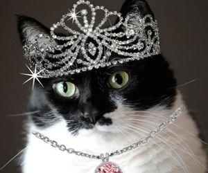 cats, princess, and crown image