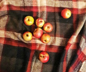 apples, autumn, and vibes image