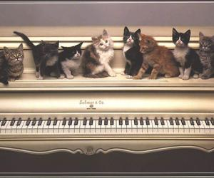 cat, piano, and kitten image