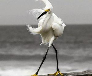 bird, white, and wind image