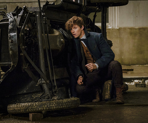 fantastic beasts, book, and newt scamander image