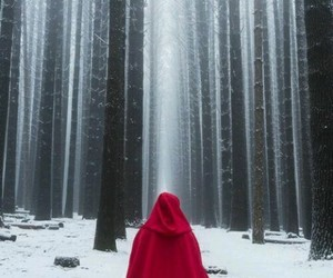 red, forest, and snow image