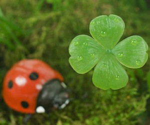 clover and ladybird image