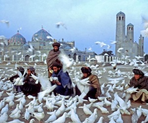 Afghanistan, beautiful, and birds image